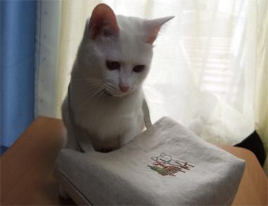 wine-cat14.jpg